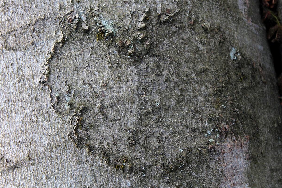 hirschweg-braunfels-14